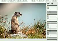 Am Großglockner - Planer (Wandkalender 2019 DIN A4 quer) - Produktdetailbild 3