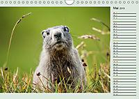 Am Großglockner - Planer (Wandkalender 2019 DIN A4 quer) - Produktdetailbild 5