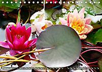 Am Seerosenteich (Tischkalender 2019 DIN A5 quer) - Produktdetailbild 2