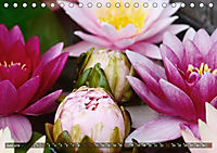 Am Seerosenteich (Tischkalender 2019 DIN A5 quer) - Produktdetailbild 6