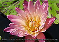 Am Seerosenteich (Wandkalender 2019 DIN A2 quer) - Produktdetailbild 1