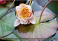 Am Seerosenteich (Wandkalender 2019 DIN A2 quer) - Produktdetailbild 5