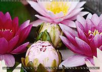 Am Seerosenteich (Wandkalender 2019 DIN A2 quer) - Produktdetailbild 6