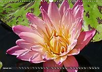 Am Seerosenteich (Wandkalender 2019 DIN A3 quer) - Produktdetailbild 1