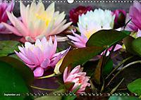 Am Seerosenteich (Wandkalender 2019 DIN A3 quer) - Produktdetailbild 9
