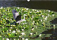 Am Seerosenteich (Wandkalender 2019 DIN A3 quer) - Produktdetailbild 12