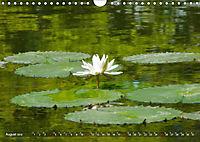 Am Seerosenteich (Wandkalender 2019 DIN A4 quer) - Produktdetailbild 8