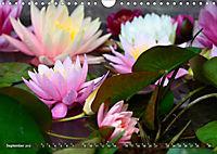 Am Seerosenteich (Wandkalender 2019 DIN A4 quer) - Produktdetailbild 9