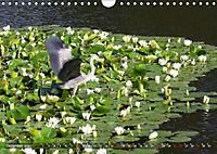 Am Seerosenteich (Wandkalender 2019 DIN A4 quer) - Produktdetailbild 12