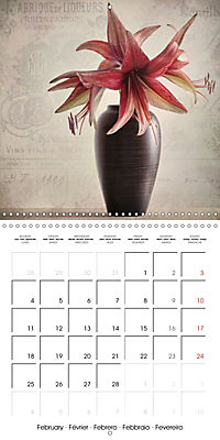 Amaryllis Vintage (Wall Calendar 2019 300 × 300 mm Square) - Produktdetailbild 2