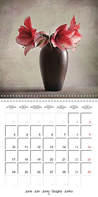 Amaryllis Vintage (Wall Calendar 2019 300 × 300 mm Square) - Produktdetailbild 6