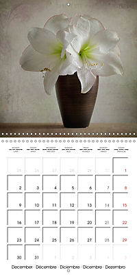 Amaryllis Vintage (Wall Calendar 2019 300 × 300 mm Square) - Produktdetailbild 12