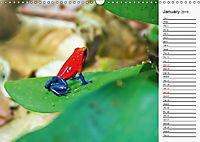 Amazing Costa Rica (Wall Calendar 2019 DIN A3 Landscape) - Produktdetailbild 1