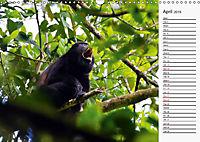 Amazing Costa Rica (Wall Calendar 2019 DIN A3 Landscape) - Produktdetailbild 4