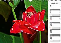 Amazing Costa Rica (Wall Calendar 2019 DIN A3 Landscape) - Produktdetailbild 10