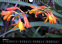 Amazing flowers (Wall Calendar 2019 DIN A4 Landscape) - Produktdetailbild 6