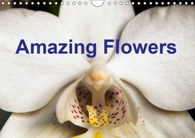 Amazing flowers (Wall Calendar 2019 DIN A4 Landscape), Steve Painter