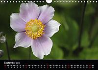 Amazing flowers (Wall Calendar 2019 DIN A4 Landscape) - Produktdetailbild 9