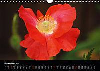 Amazing flowers (Wall Calendar 2019 DIN A4 Landscape) - Produktdetailbild 11