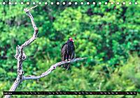 Amazonas - Faszination Regenwald (Tischkalender 2019 DIN A5 quer) - Produktdetailbild 7