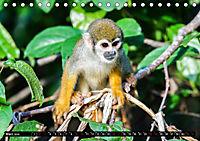 Amazonas - Faszination Regenwald (Tischkalender 2019 DIN A5 quer) - Produktdetailbild 3