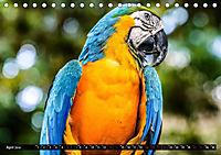 Amazonas - Faszination Regenwald (Tischkalender 2019 DIN A5 quer) - Produktdetailbild 4