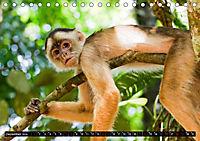Amazonas - Faszination Regenwald (Tischkalender 2019 DIN A5 quer) - Produktdetailbild 12