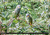 Amazonas - Faszination Regenwald (Tischkalender 2019 DIN A5 quer) - Produktdetailbild 10