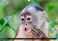 Amazonas - Faszination Regenwald (Wandkalender 2019 DIN A3 quer) - Produktdetailbild 9