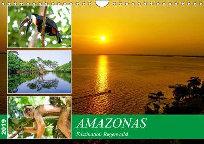 Amazonas - Faszination Regenwald (Wandkalender 2019 DIN A4 quer), Markus Nawrocki