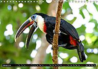 Amazonas - Faszination Regenwald (Wandkalender 2019 DIN A4 quer) - Produktdetailbild 1