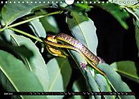 Amazonas - Faszination Regenwald (Wandkalender 2019 DIN A4 quer) - Produktdetailbild 6