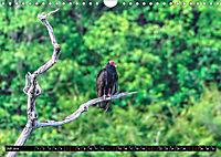 Amazonas - Faszination Regenwald (Wandkalender 2019 DIN A4 quer) - Produktdetailbild 7