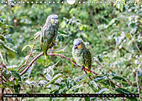 Amazonas - Faszination Regenwald (Wandkalender 2019 DIN A4 quer) - Produktdetailbild 10