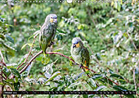 Amazonas - Faszination Regenwald (Wandkalender 2019 DIN A3 quer) - Produktdetailbild 10