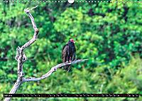 Amazonas - Faszination Regenwald (Wandkalender 2019 DIN A3 quer) - Produktdetailbild 7