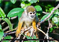 Amazonas - Faszination Regenwald (Wandkalender 2019 DIN A3 quer) - Produktdetailbild 3