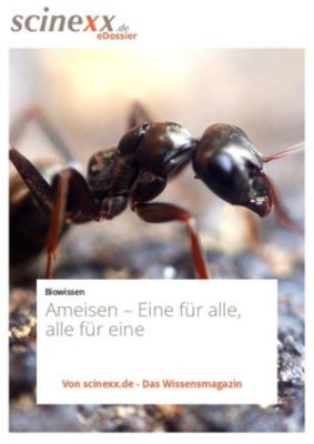 Ameisen, Dieter Lohmann