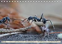Ameisen - Ordnung im Durcheinander (Tischkalender 2019 DIN A5 quer) - Produktdetailbild 6