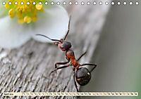 Ameisen - Ordnung im Durcheinander (Tischkalender 2019 DIN A5 quer) - Produktdetailbild 3
