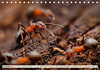 Ameisen - Ordnung im Durcheinander (Tischkalender 2019 DIN A5 quer) - Produktdetailbild 11