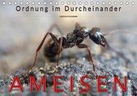 Ameisen - Ordnung im Durcheinander (Tischkalender 2019 DIN A5 quer), Peter Roder