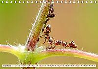 Ameisen - Ordnung im Durcheinander (Tischkalender 2019 DIN A5 quer) - Produktdetailbild 8