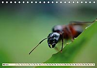 Ameisen - Ordnung im Durcheinander (Tischkalender 2019 DIN A5 quer) - Produktdetailbild 5