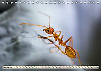Ameisen - Ordnung im Durcheinander (Tischkalender 2019 DIN A5 quer) - Produktdetailbild 2