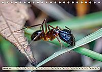 Ameisen - Ordnung im Durcheinander (Tischkalender 2019 DIN A5 quer) - Produktdetailbild 1