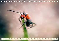 Ameisen - Ordnung im Durcheinander (Tischkalender 2019 DIN A5 quer) - Produktdetailbild 10