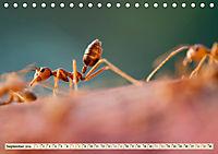 Ameisen - Ordnung im Durcheinander (Tischkalender 2019 DIN A5 quer) - Produktdetailbild 9
