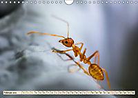 Ameisen - Ordnung im Durcheinander (Wandkalender 2019 DIN A4 quer) - Produktdetailbild 2