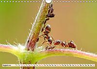 Ameisen - Ordnung im Durcheinander (Wandkalender 2019 DIN A4 quer) - Produktdetailbild 8